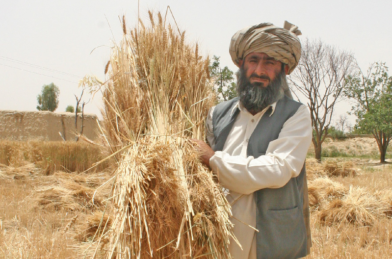 pakistan farmer
